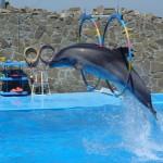 ейск дельфинарий
